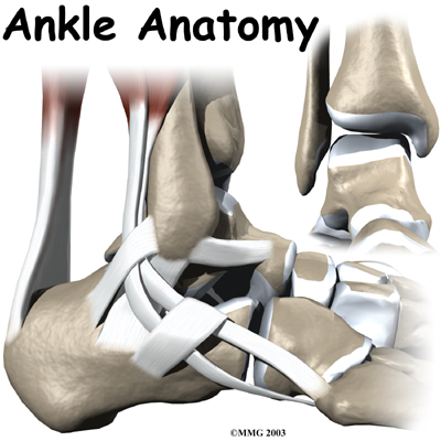 Introduction to Ankle Issues