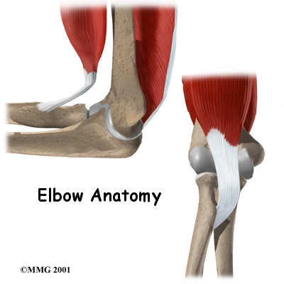 Introduction to Elbow