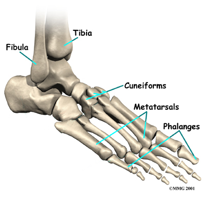 Physiotherapy in Oakville and Burlington for Foot