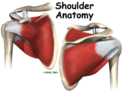 Physiotherapy in Oakville and Burlington for Shoulder